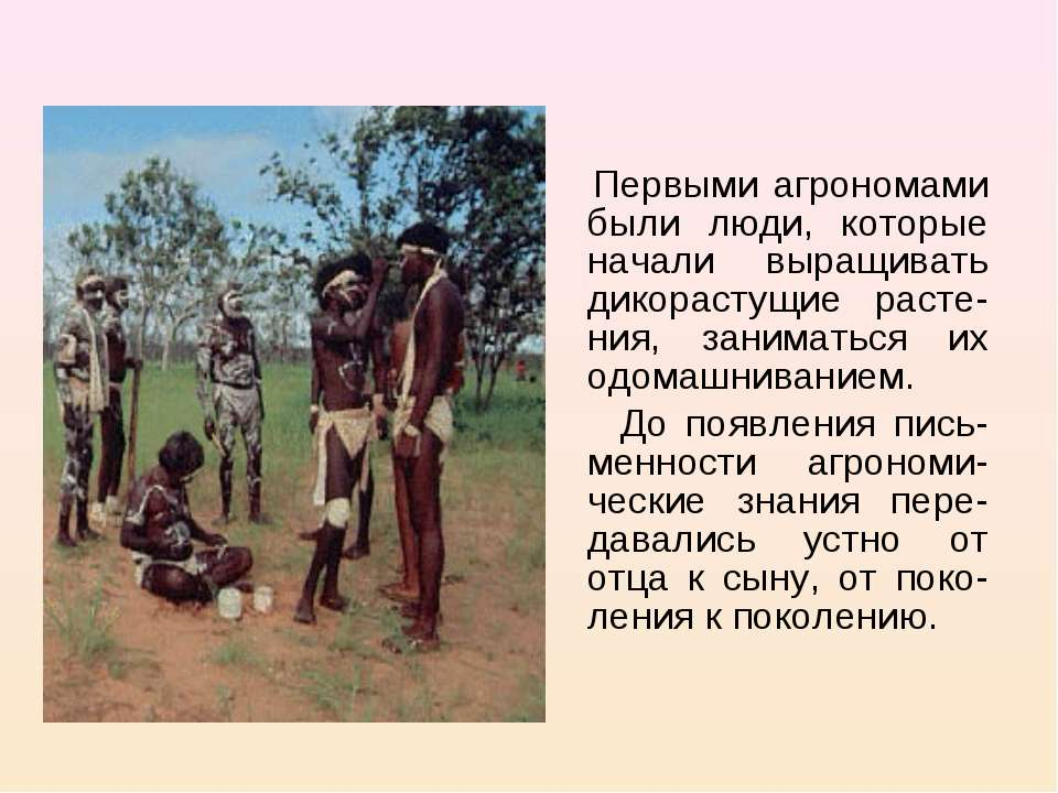 Первыми агрономами были люди, которые начали выращивать дикорастущие расте-ни...
