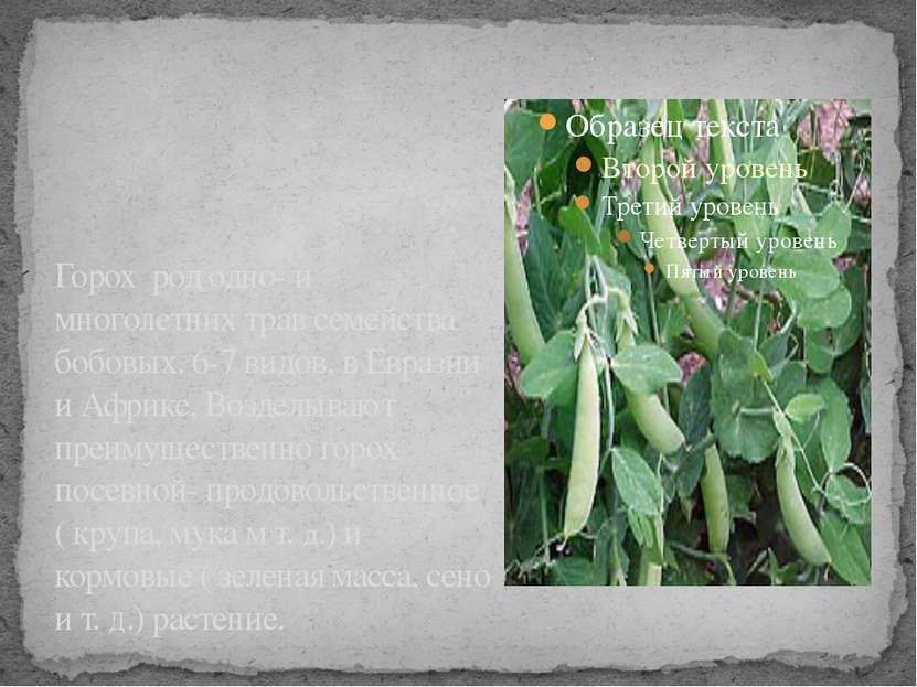 Горох род одно- и многолетних трав семейства бобовых. 6-7 видов, в Евразии и ...