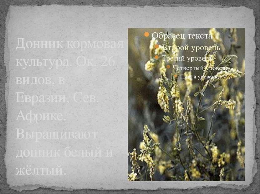 Донник кормовая культура. Ок. 26 видов, в Евразии, Сев. Африке. Выращивают до...