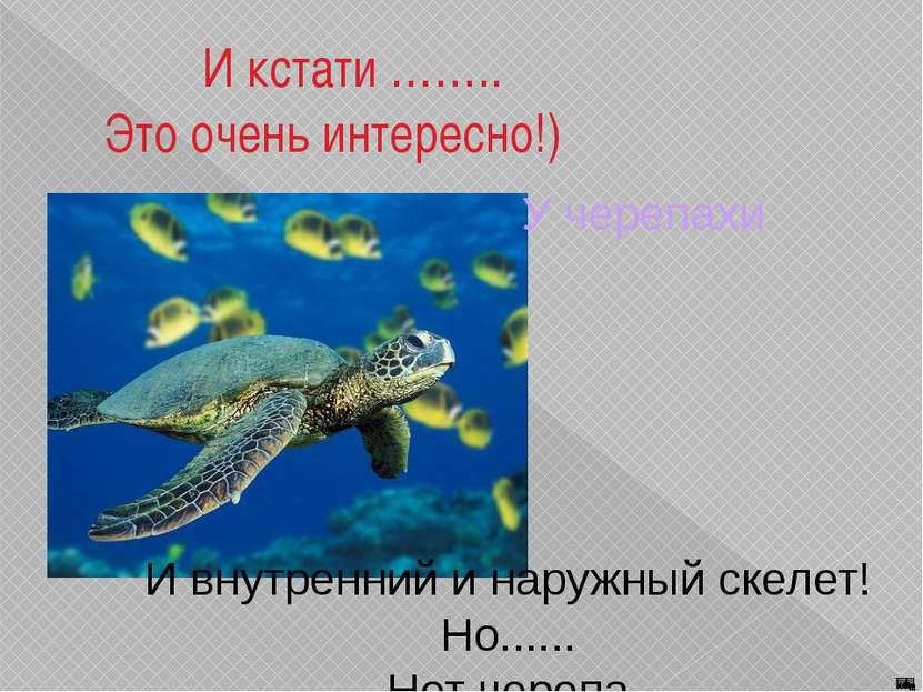 И кстати …….. Это очень интересно!) У черепахи И внутренний и наружный скелет...