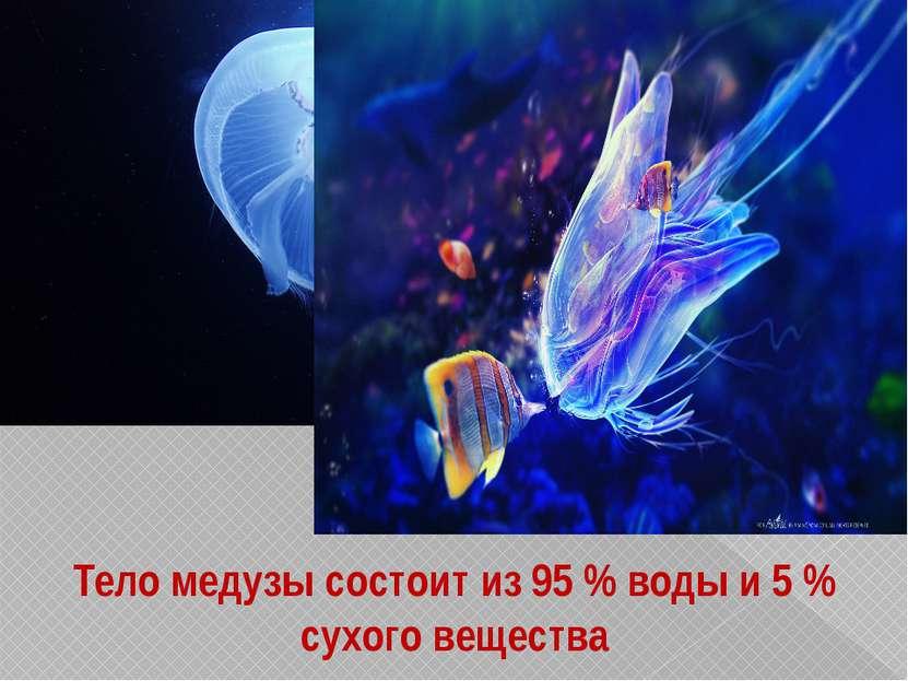 Тело медузы состоит из 95 % воды и 5 % сухого вещества