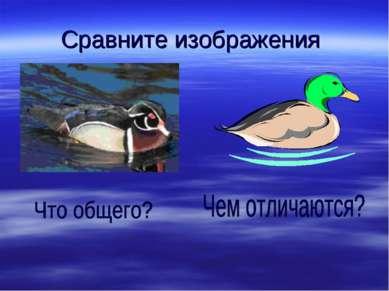 Сравните изображения