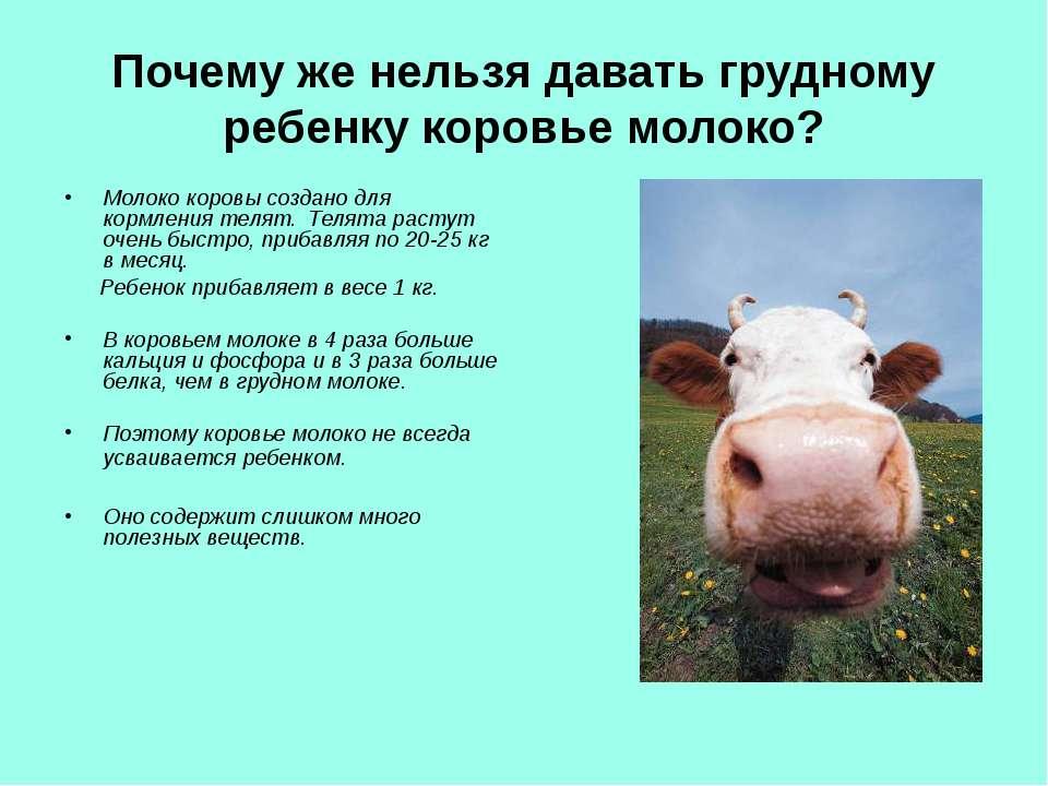 Почему же нельзя давать грудному ребенку коровье молоко? Молоко коровы создан...