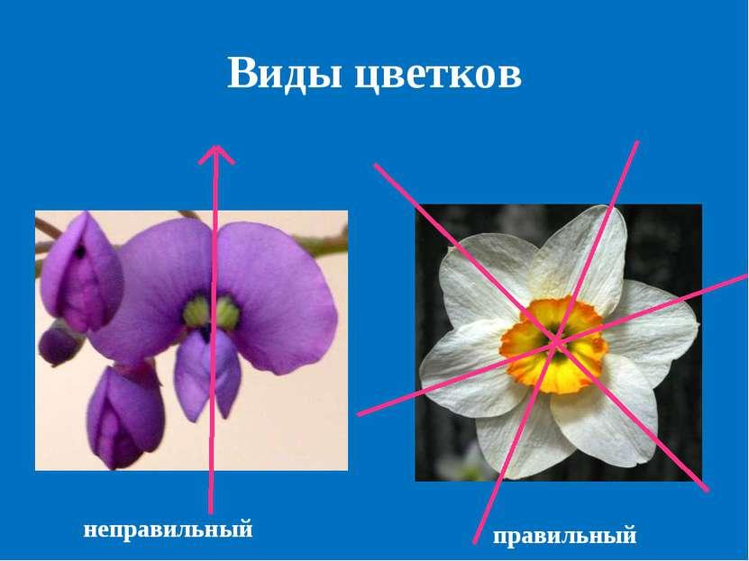 Виды цветков неправильный правильный