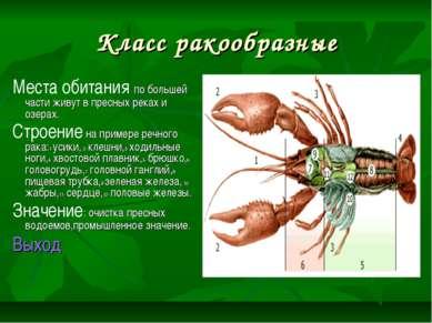 Класс ракообразные Места обитания по большей части живут в пресных реках и оз...