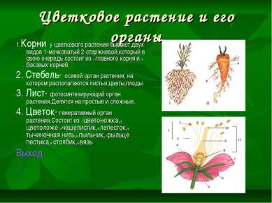 Цветковое растение и его органы 1.Корни у цветкового растения бывают двух вид...