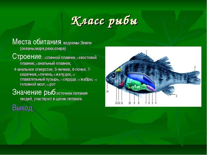 Класс рыбы Места обитания: водоемы Земли (океаны,моря,реки,озера) Строение: 1...