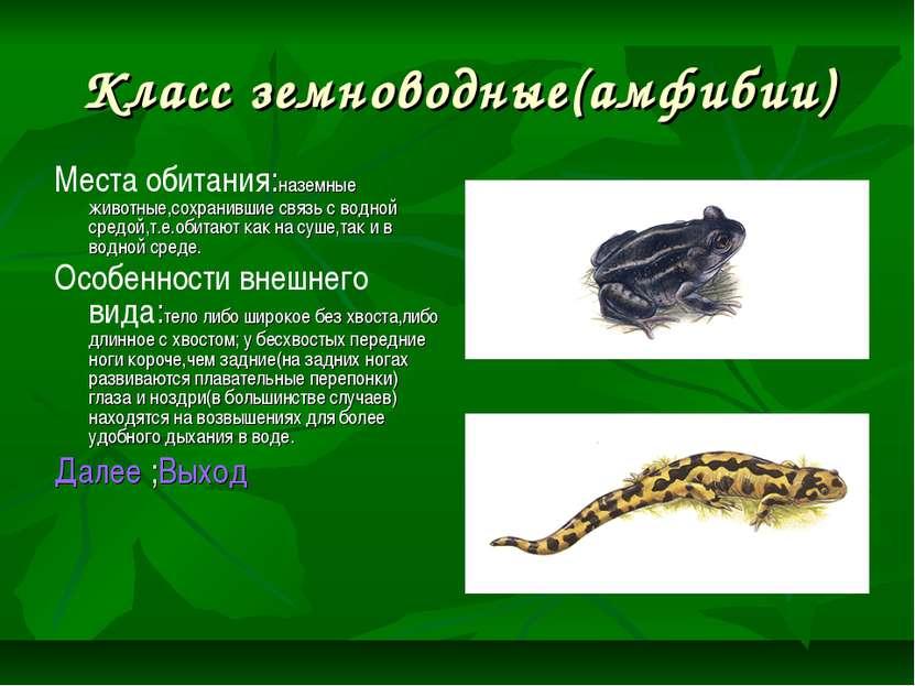 Класс земноводные(амфибии) Места обитания:наземные животные,сохранившие связь...