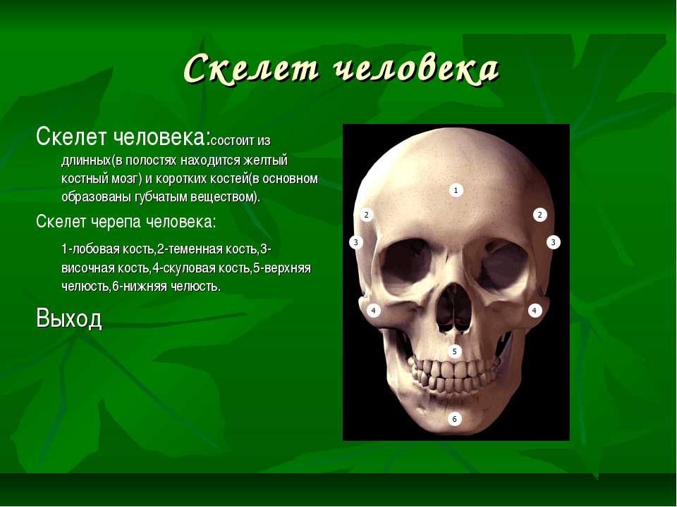 Скелет человека Скелет человека:состоит из длинных(в полостях находится желты...