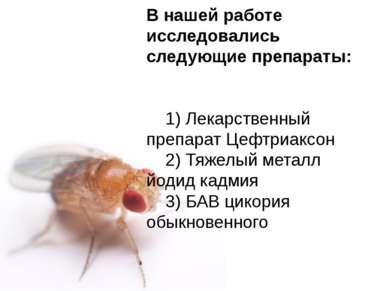 Домащенко А.Н. В нашей работе исследовались следующие препараты: 1) Лекарстве...
