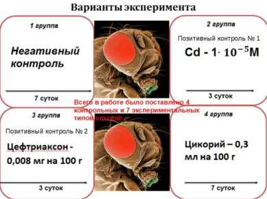 Цефтриаксон - 0,008 мг на 100 г 3 группа 3 суток Варианты эксперимента 7 суто...