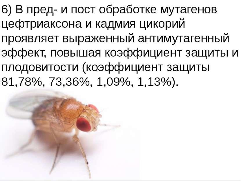 Домащенко А.Н. 6) В пред- и пост обработке мутагенов цефтриаксона и кадмия ци...