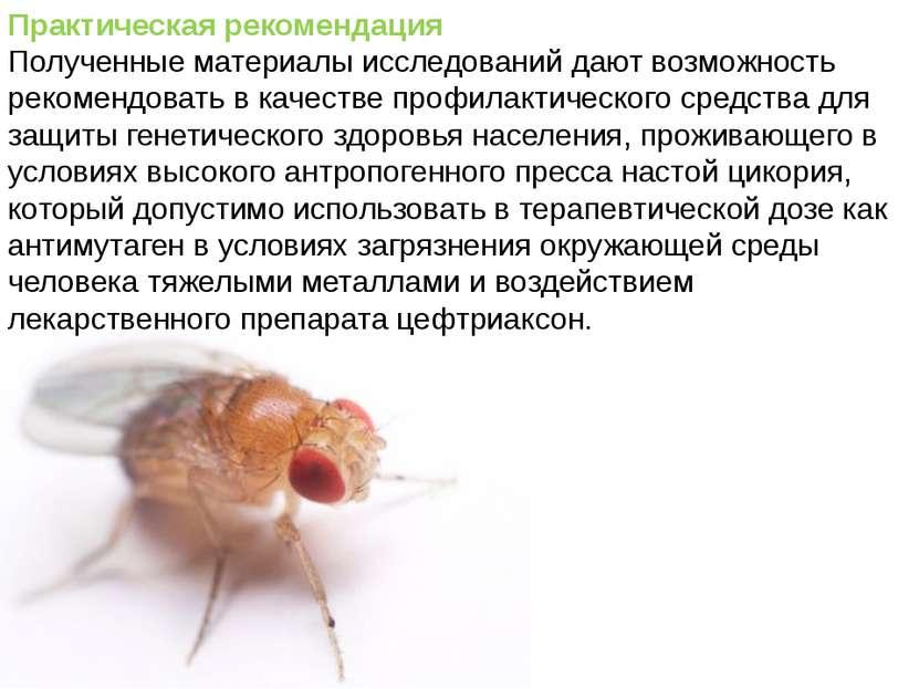 Домащенко А.Н. Практическая рекомендация Полученные материалы исследований да...