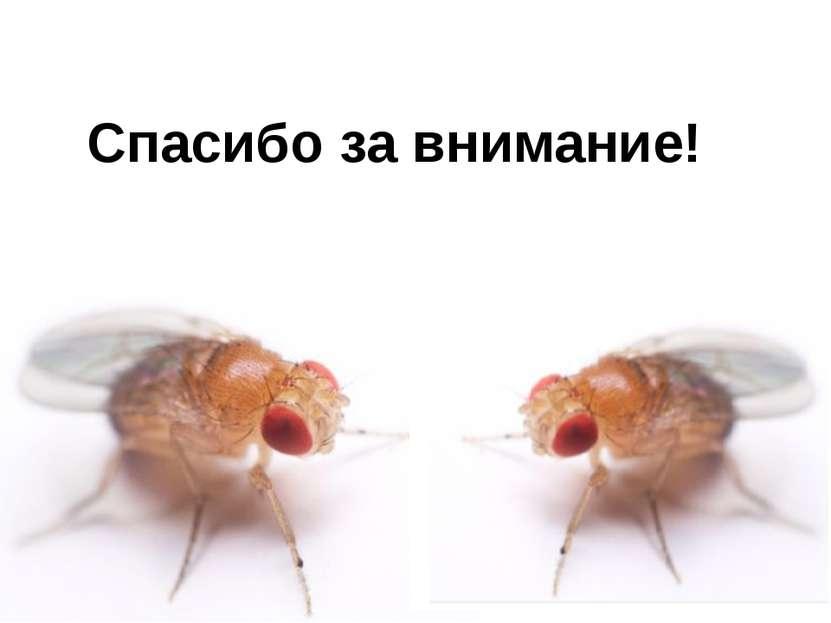 Домащенко А.Н. Спасибо за внимание!