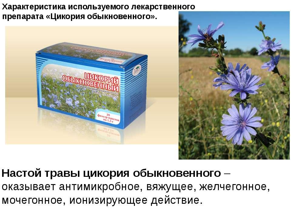 Характеристика используемого лекарственного препарата «Цикория обыкновенного»...