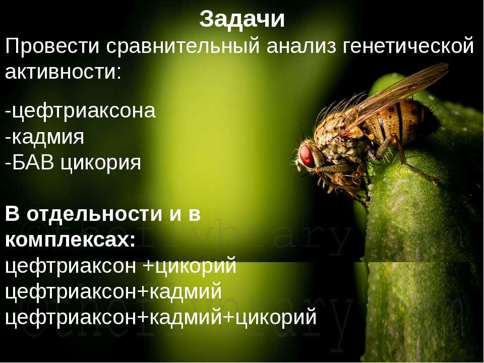 Домащенко А.Н. -цефтриаксона -кадмия -БАВ цикория В отдельности и в комплекса...
