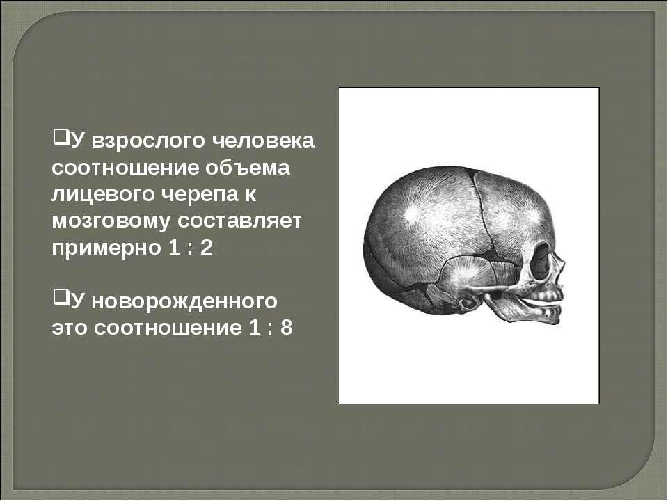 У взрослого человека соотношение объема лицевого черепа к мозговому составляе...
