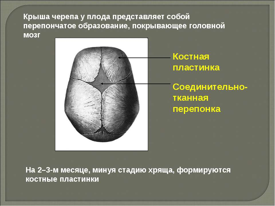 Костная пластинка Соединительно-тканная перепонка На 2–3-м месяце, минуя стад...