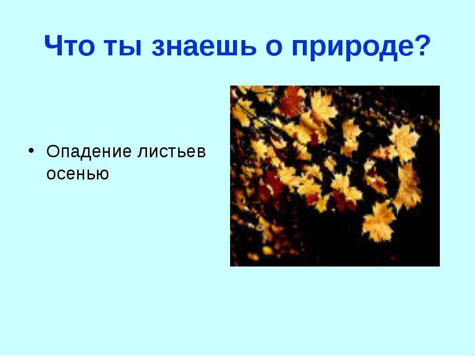 Что ты знаешь о природе? Опадение листьев осенью