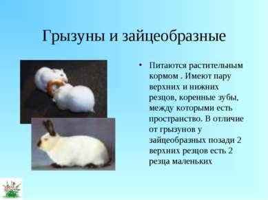 Грызуны и зайцеобразные Питаются растительным кормом . Имеют пару верхних и н...