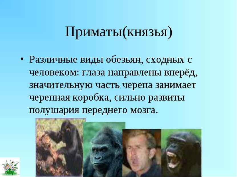Приматы(князья) Различные виды обезьян, сходных с человеком: глаза направлены...