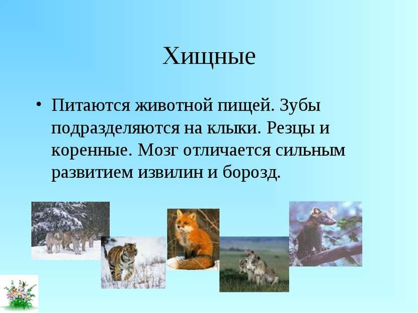 Хищные Питаются животной пищей. Зубы подразделяются на клыки. Резцы и коренны...