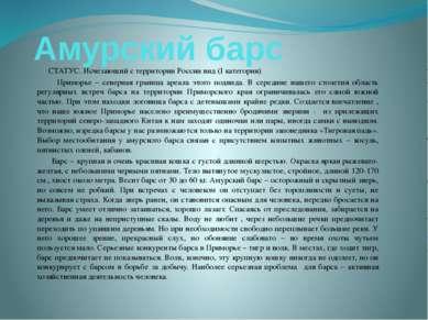 Амурский барс СТАТУС. Исчезающий с территории России вид (I категория) Примор...