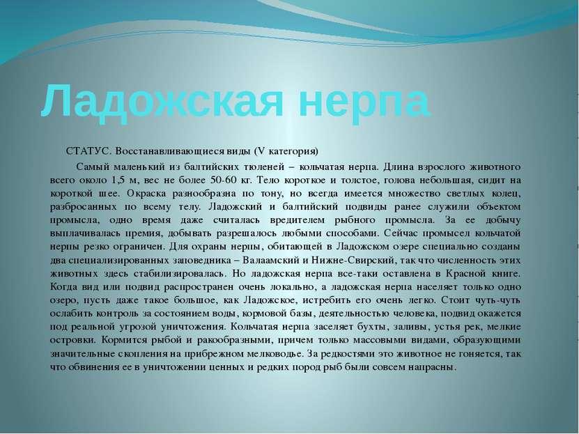 Ладожская нерпа СТАТУС. Восстанавливающиеся виды (V категория) Самый маленьки...