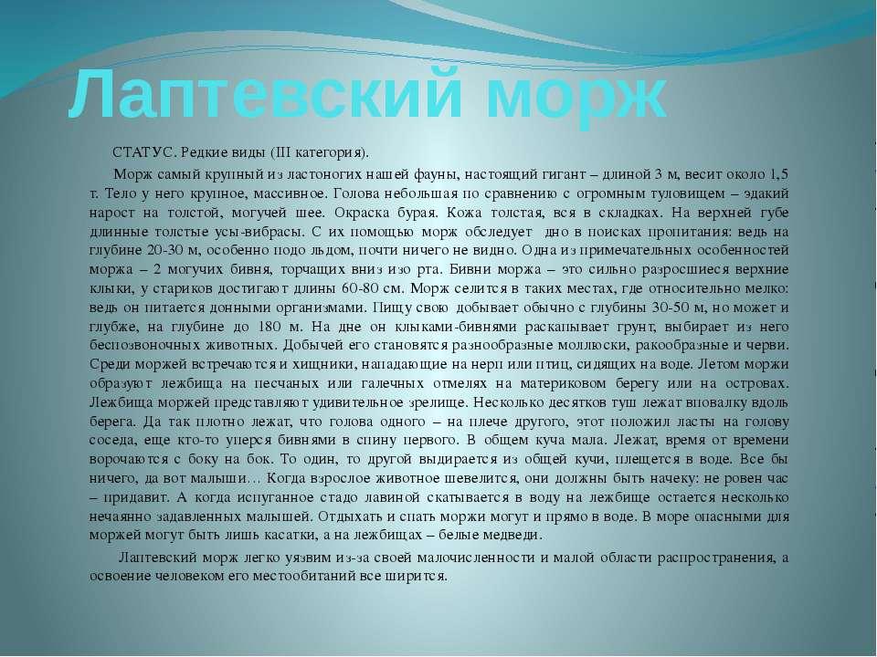 Лаптевский морж СТАТУС. Редкие виды (III категория). Морж самый крупный из ла...