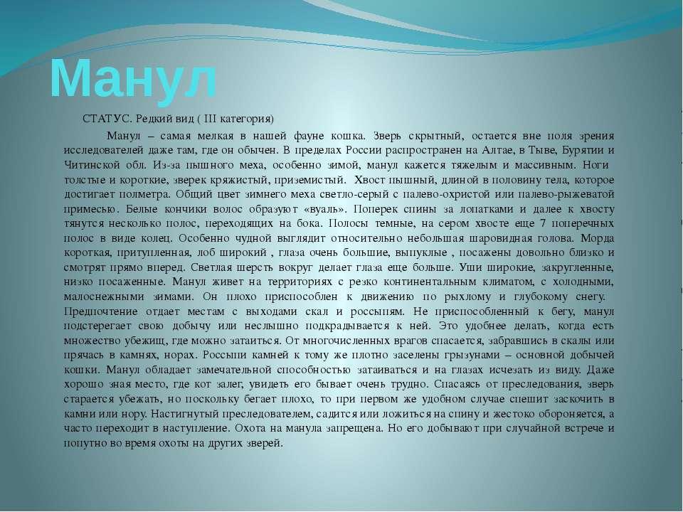 Манул СТАТУС. Редкий вид ( III категория) Манул – самая мелкая в нашей фауне ...