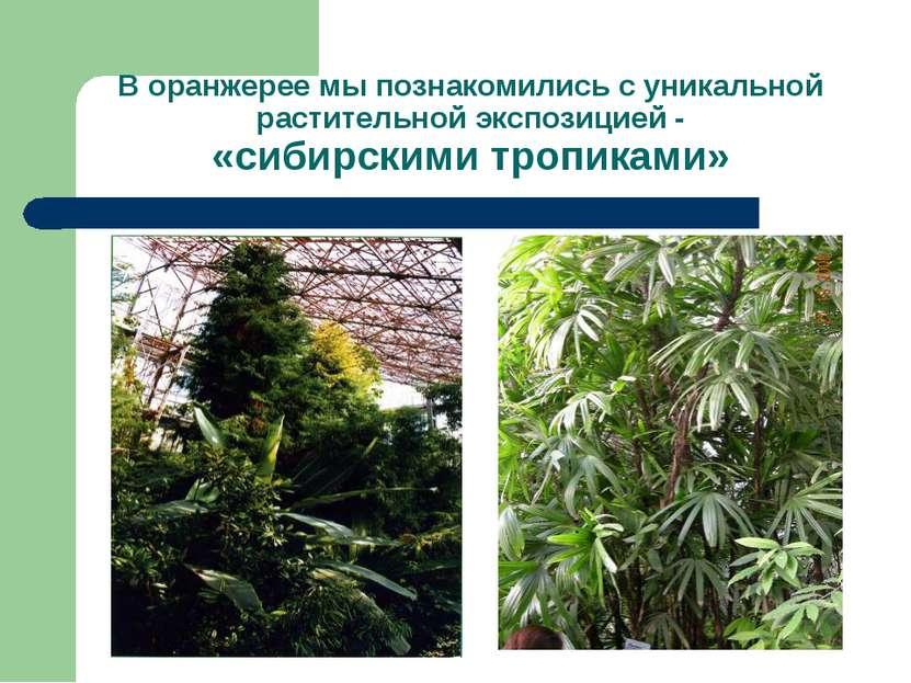 В оранжерее мы познакомились с уникальной растительной экспозицией - «сибирск...