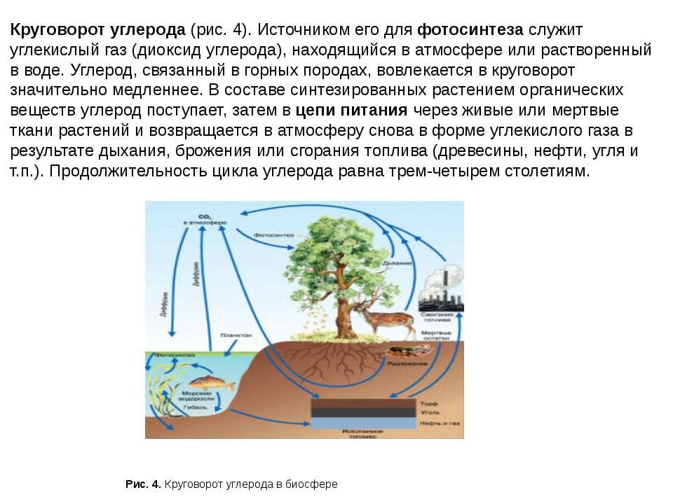 Круговорот углерода (рис. 4). Источником его для фотосинтеза служит углекислы...