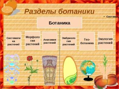 Разделы ботаники