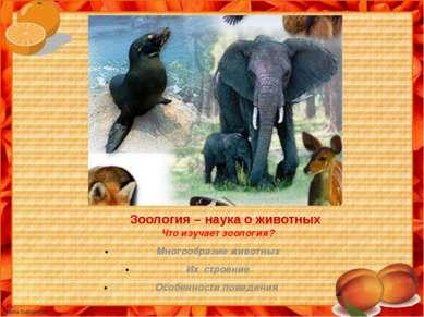 Зоология – наука о животных Что изучает зоология? Многообразие животных Их ст...