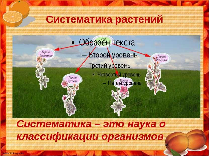 Систематика растений Систематика – это наука о классификации организмов