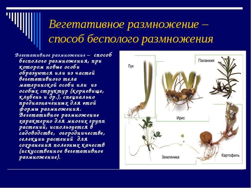 Вегетативное размножение – способ бесполого размножения Вегетативное размноже...