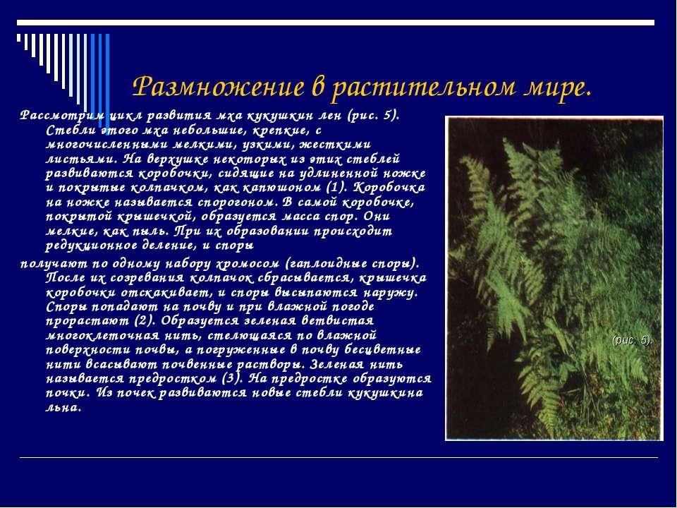 Размножение в растительном мире. Рассмотрим цикл развития мха кукушкин лен (р...