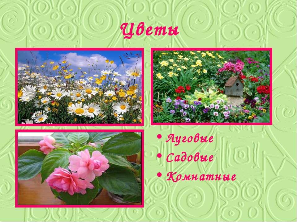 Цветы Луговые Садовые Комнатные