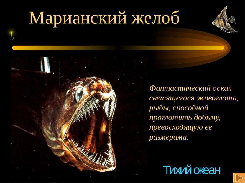 Марианский желоб Фантастический оскал светящегося живоглота, рыбы, способной ...