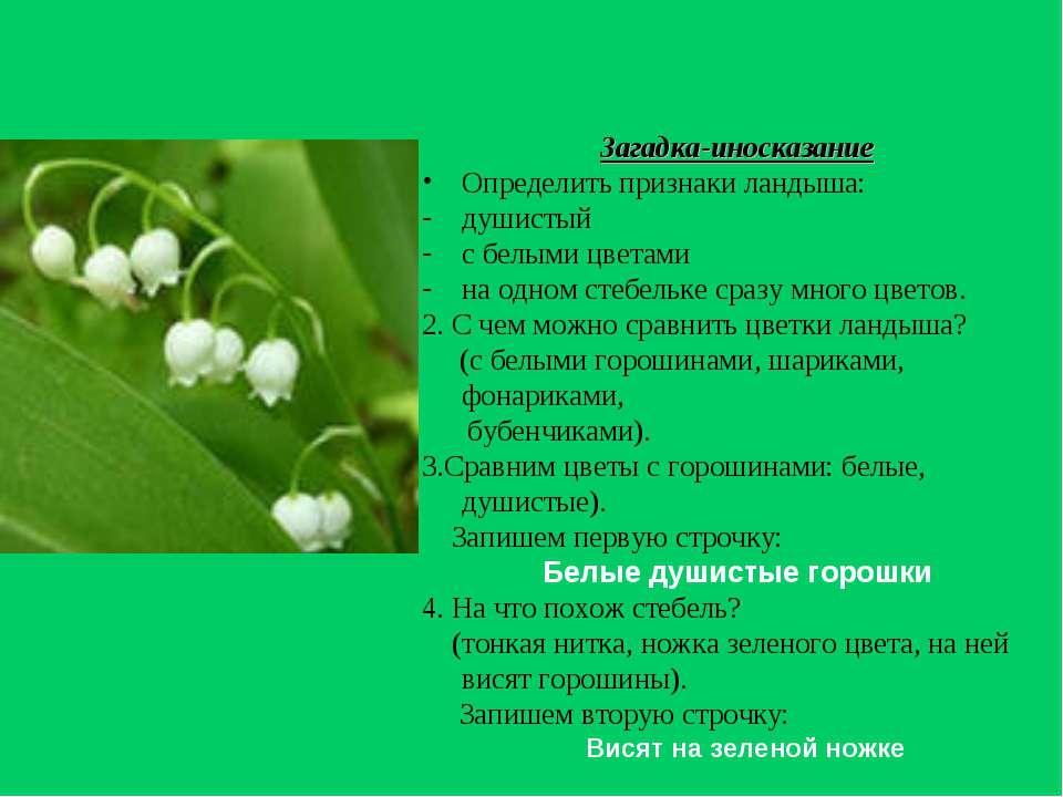 Загадка-иносказание Определить признаки ландыша: душистый с белыми цветами на...