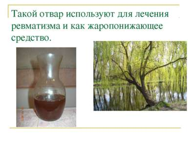 Такой отвар используют для лечения ревматизма и как жаропонижающее средство.