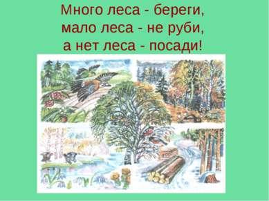 Много леса - береги, мало леса - не руби, а нет леса - посади!