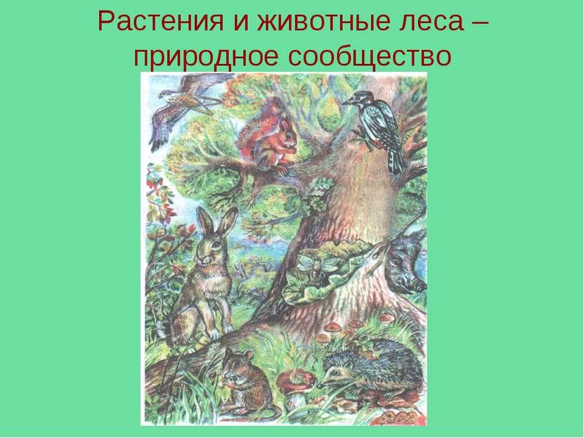 Растения и животные леса – природное сообщество