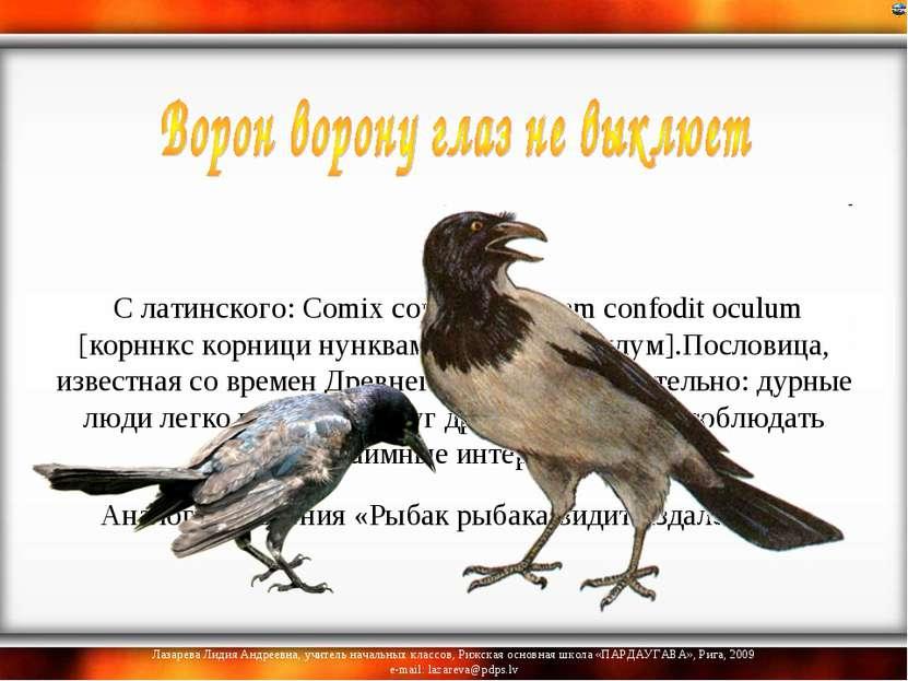 С латинского: Comix cornici nunquam confodit oculum [корннкс корници нунквам...