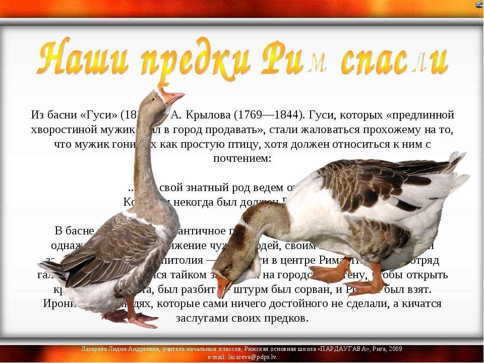 Из басни «Гуси» (1811) И. А. Крылова (1769—1844). Гуси, которых «предлинной...