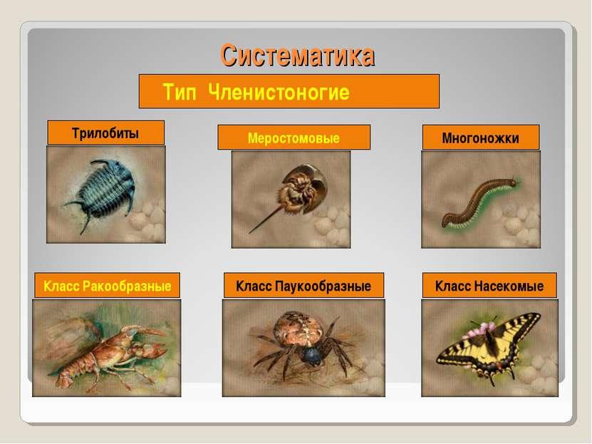 Систематика Тип Членистоногие