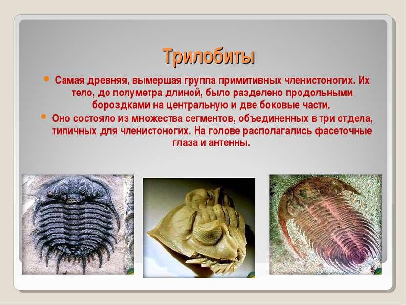 Трилобиты Самая древняя, вымершая группа примитивных членистоногих. Их тело, ...