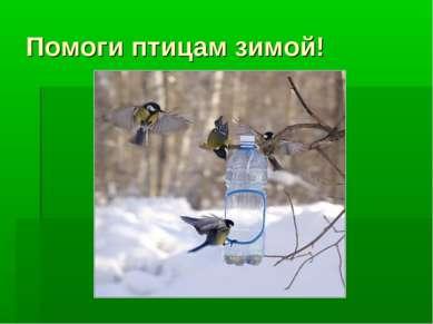 Помоги птицам зимой!