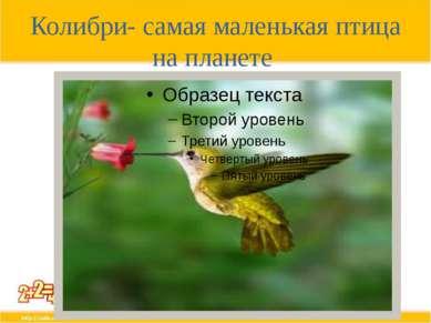 Колибри- самая маленькая птица на планете