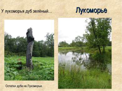 Лукоморье У лукоморья дуб зелёный… Остатки дуба на Лукоморье.